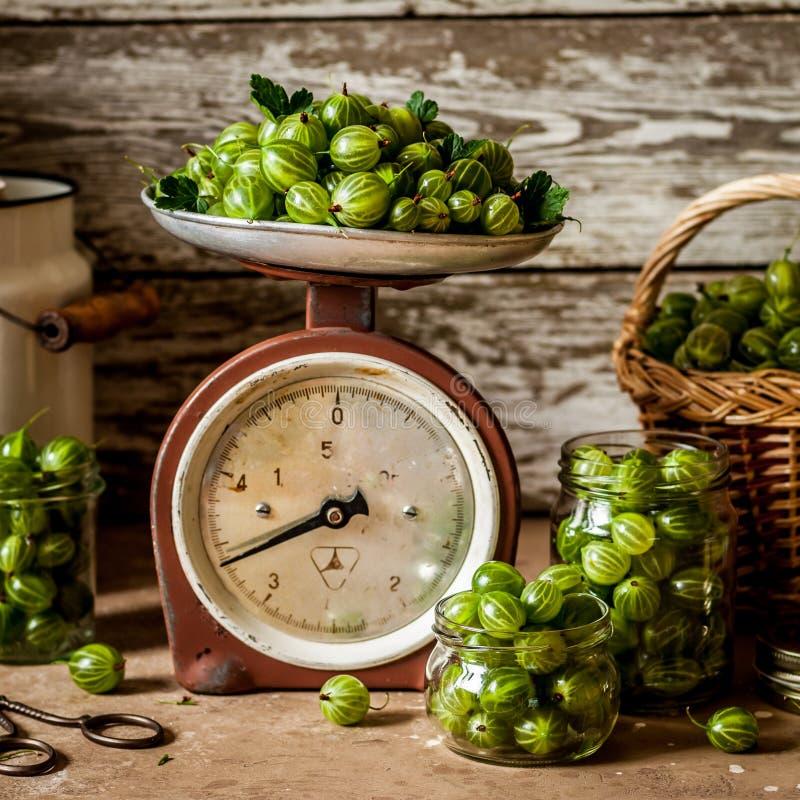 绿色鹅莓 图库摄影