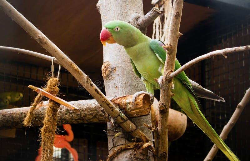 绿色鹦鹉坐树 免版税库存图片