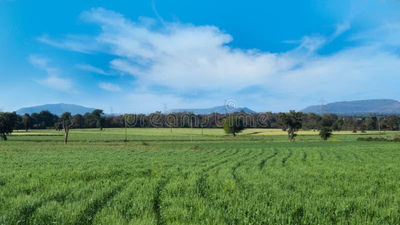 绿色麦子庄稼/领域与蓝天和山 免版税库存图片