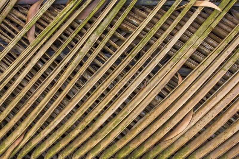 绿色黄色干燥分支棕榈叶 相交的线路 自然表面 免版税图库摄影