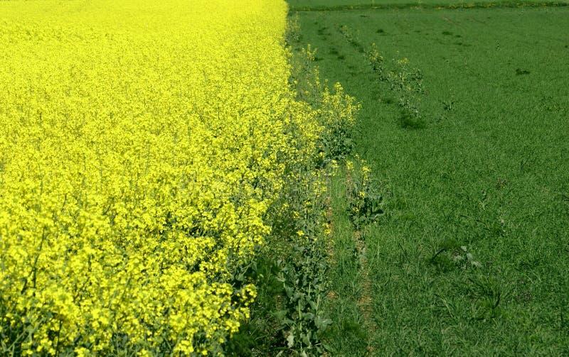 绿色黄色 免版税库存图片