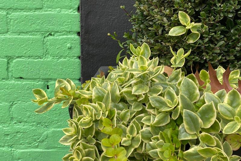 绿色黑色仓库墙关闭树篱 图库摄影