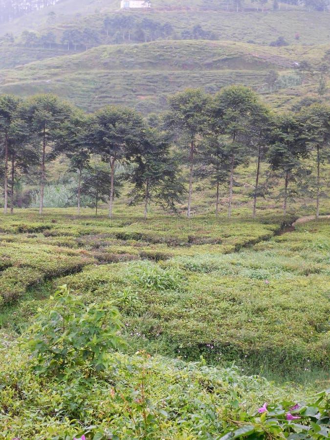 绿色,密林,看法,树,自然 免版税库存图片