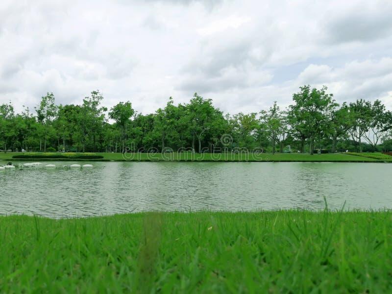 绿色gass和运河在庭院公园 图库摄影
