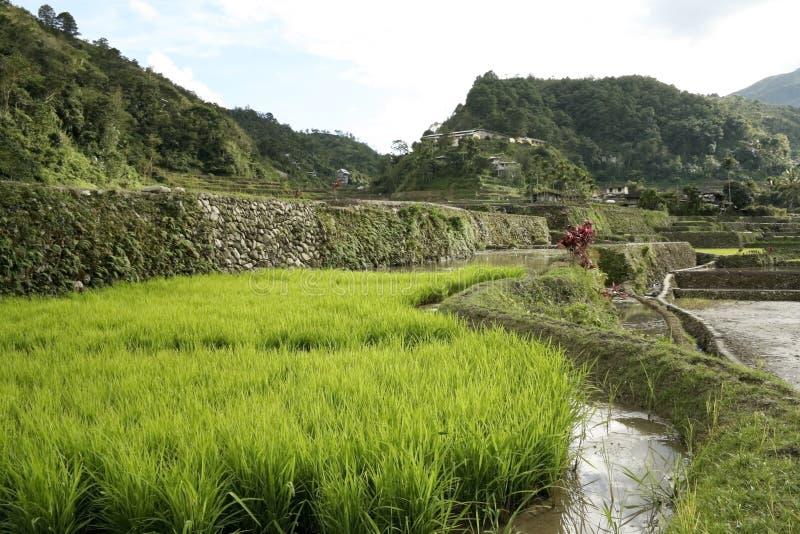 绿色ifugao菲律宾米大阳台 免版税库存照片