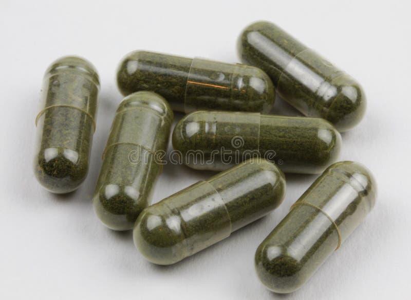 绿色jiaogulan萃取物补充胶囊 库存图片