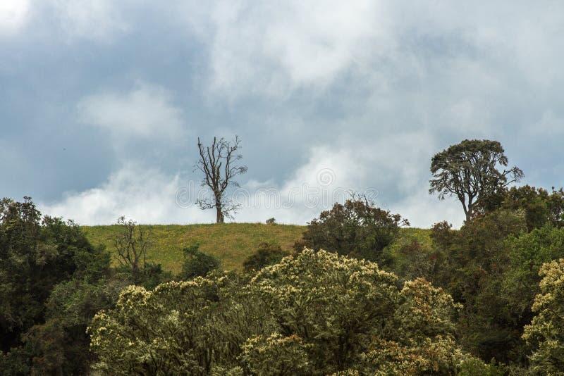 绿色Lanscape和天空 图库摄影