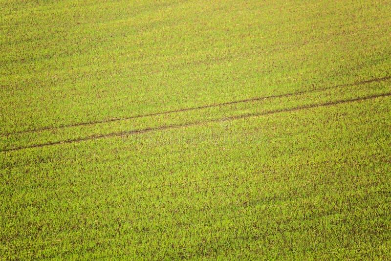 绿草作为背景或纹理与一条路从拖拉机 免版税图库摄影
