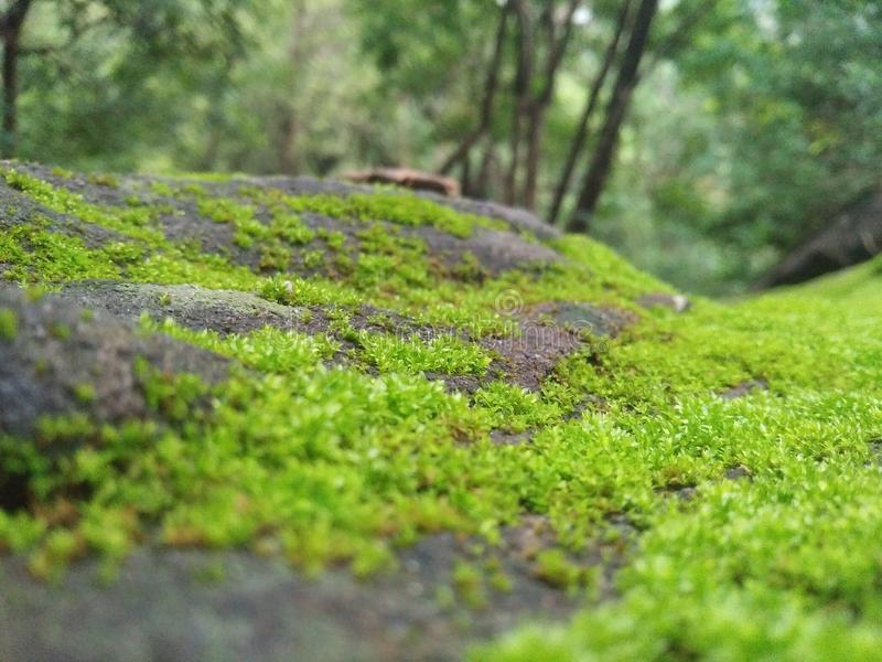 绿草出现在硬岩石头 库存照片