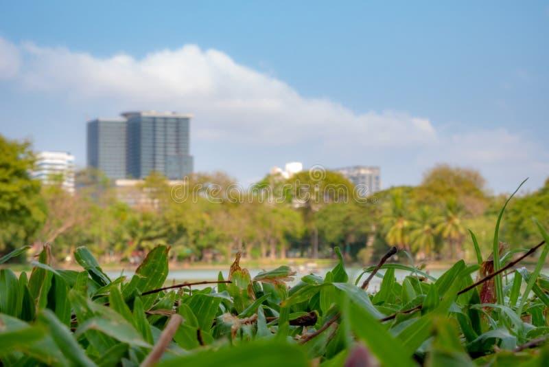 绿草前景在被弄脏的大厦和天空蔚蓝背景的公园 免版税库存照片