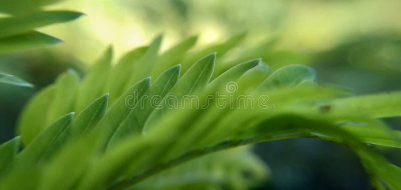 绿草叶子的抽象背景有被弄脏的作用的 图库摄影