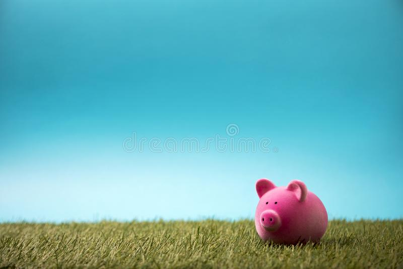 绿草和天空蔚蓝的存钱罐 库存照片