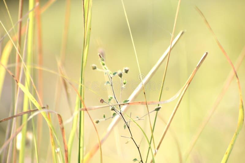 绿草和它的花美丽的短冷期  库存照片