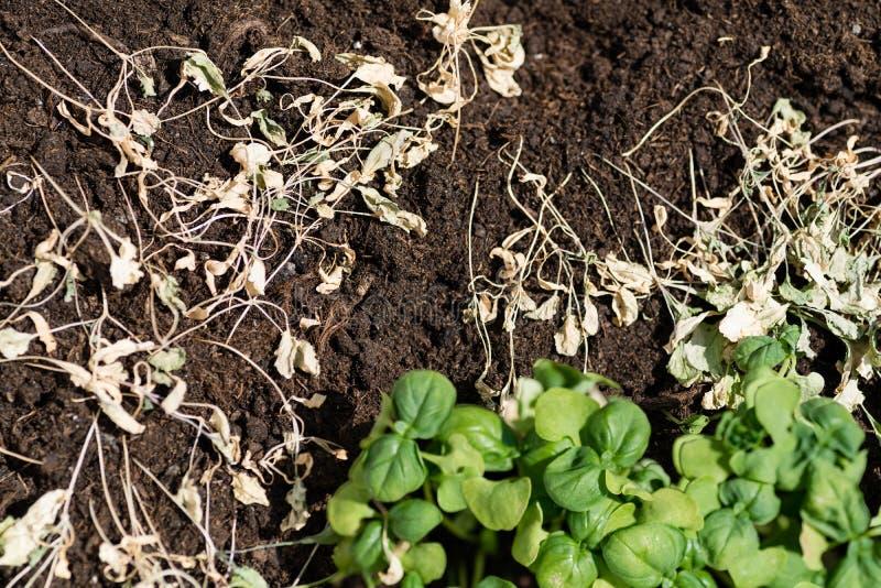 绿草和干草 库存图片