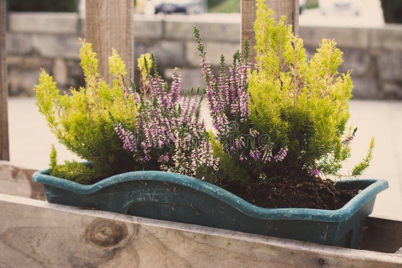 绿草和开花的花在花盆在篱芭 在木篱芭的花容器在透视 大阳台设计 库存照片