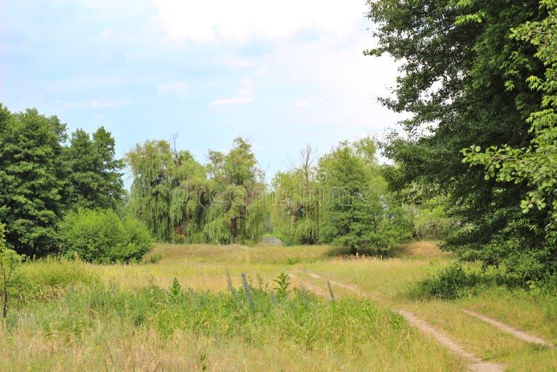绿草和杨柳的风景照片在背景中反对天空蔚蓝 在前景的乡下公路 免版税库存图片