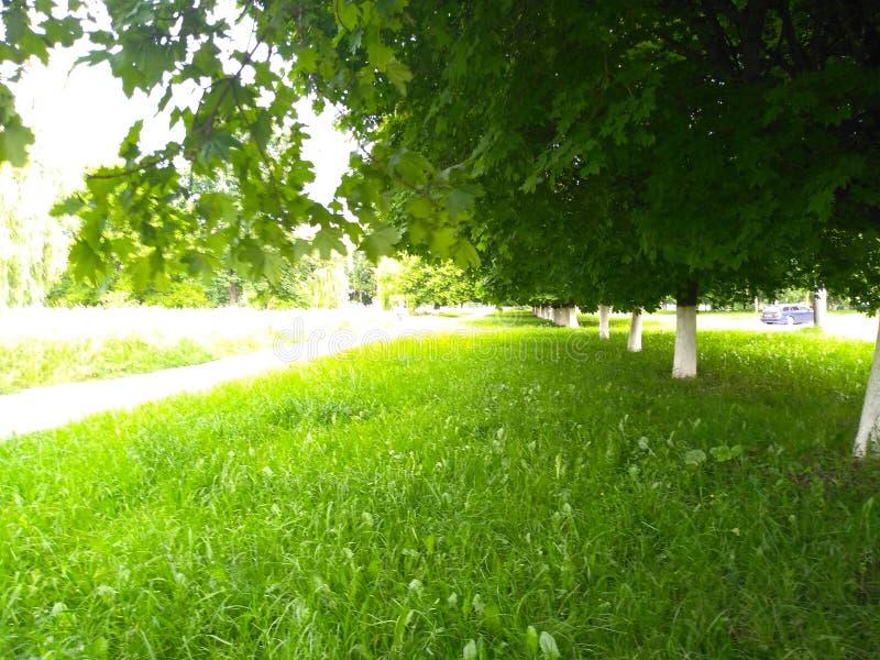 绿草和树 天空蔚蓝在春天 图库摄影