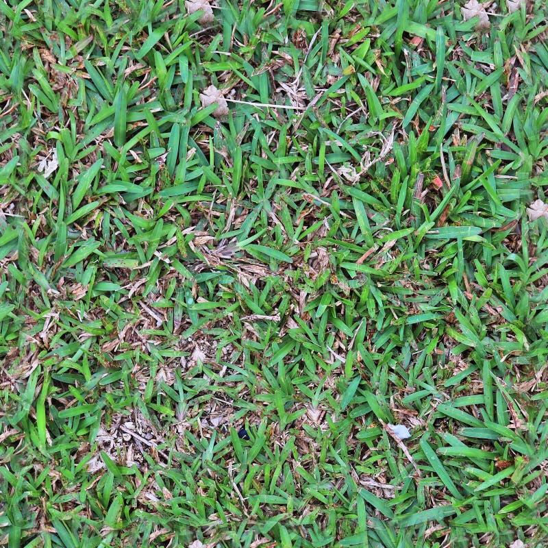 绿草和植物高分辨率seemless纹理在大小上塑造与6多megapixel的3d的 库存照片