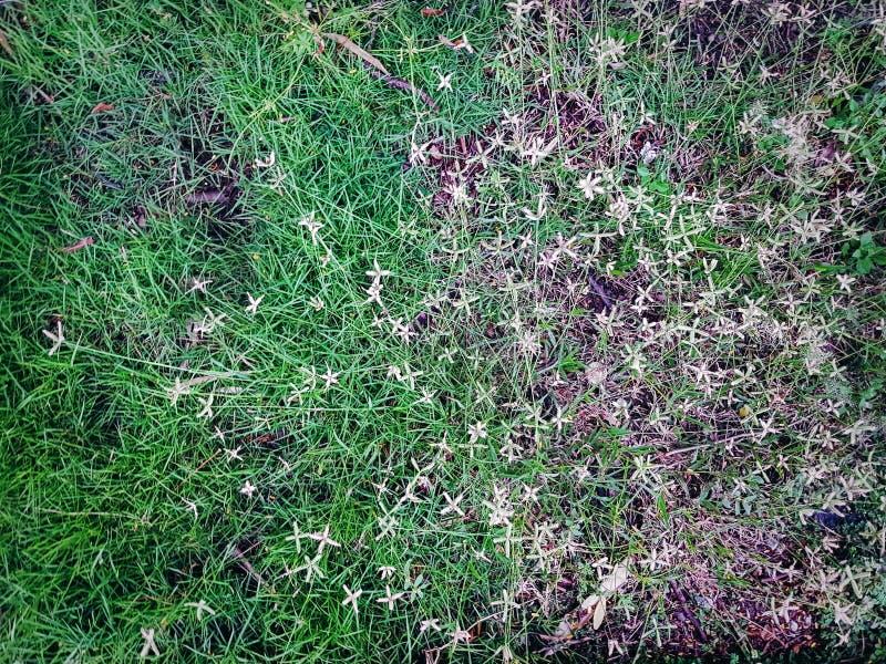 绿草和毛莨厂 图库摄影