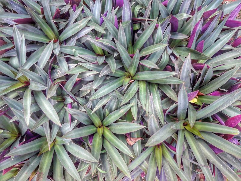 绿草在庭院看起来美丽 图库摄影