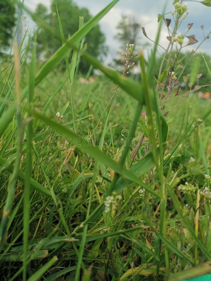 绿草在2019年俄罗斯的晴朗的夏天 库存照片