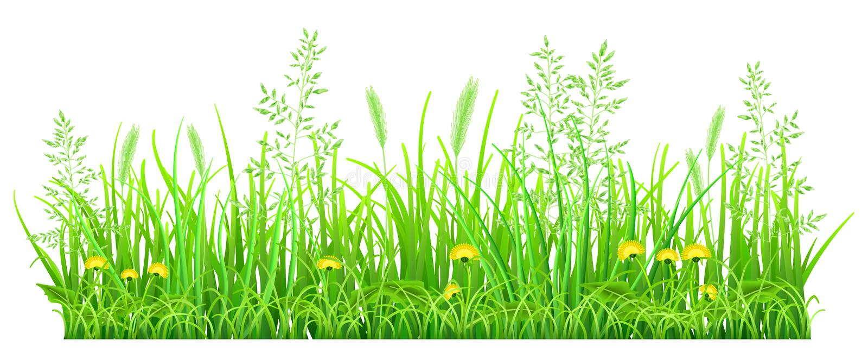 绿草用蒲公英 皇族释放例证