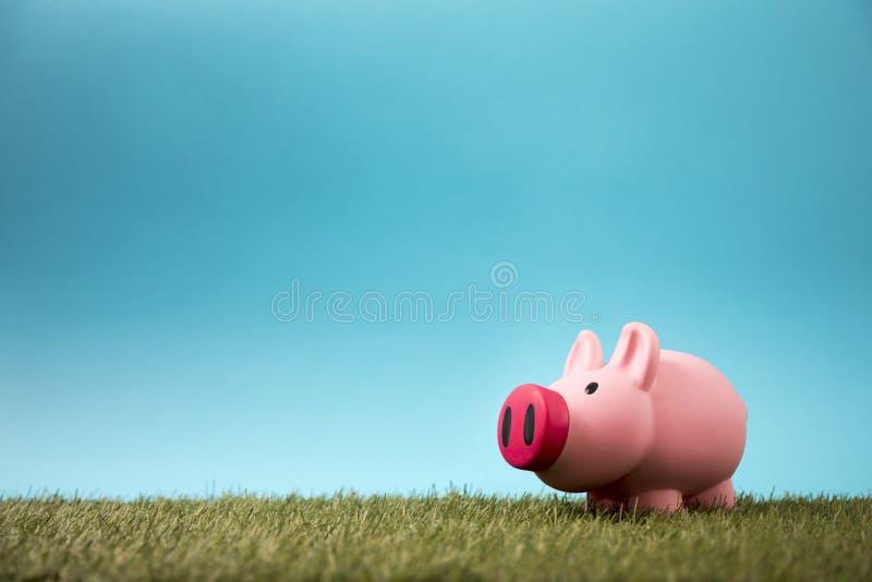 绿草的存钱罐 免版税库存照片