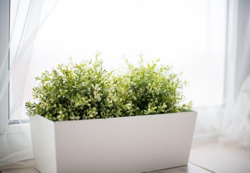 绿草的装饰布什在立场的在一非常明亮的roo 库存图片