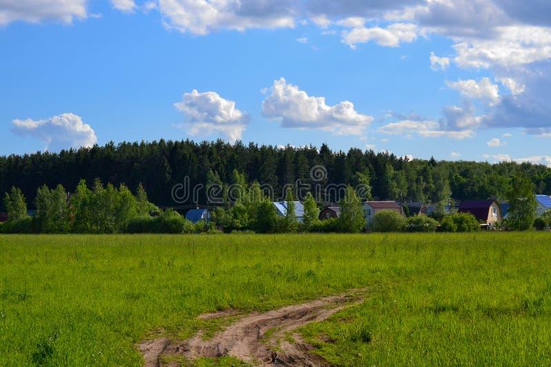 绿草的领域和完善的天空和树 免版税库存图片