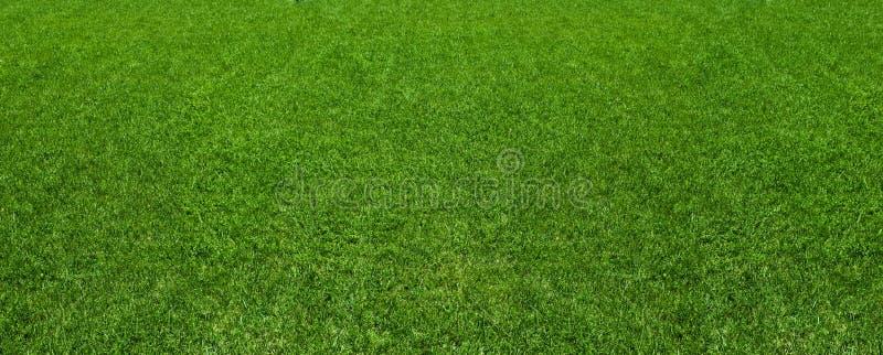 绿草背景纹理表面 免版税库存图片