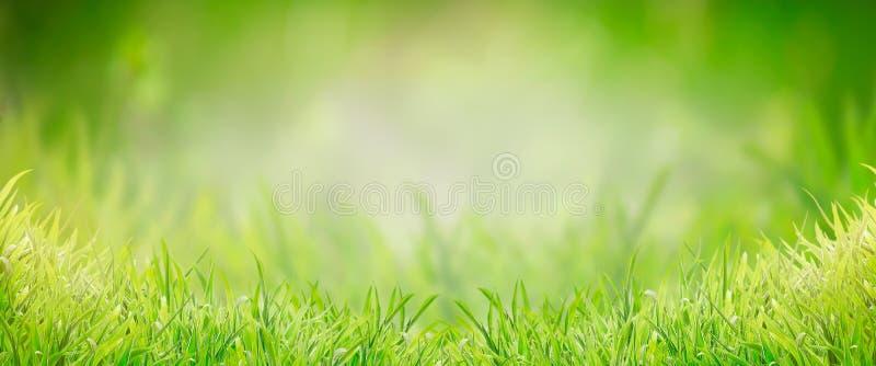 绿草背景,横幅 夏天或春天自然 r 免版税图库摄影