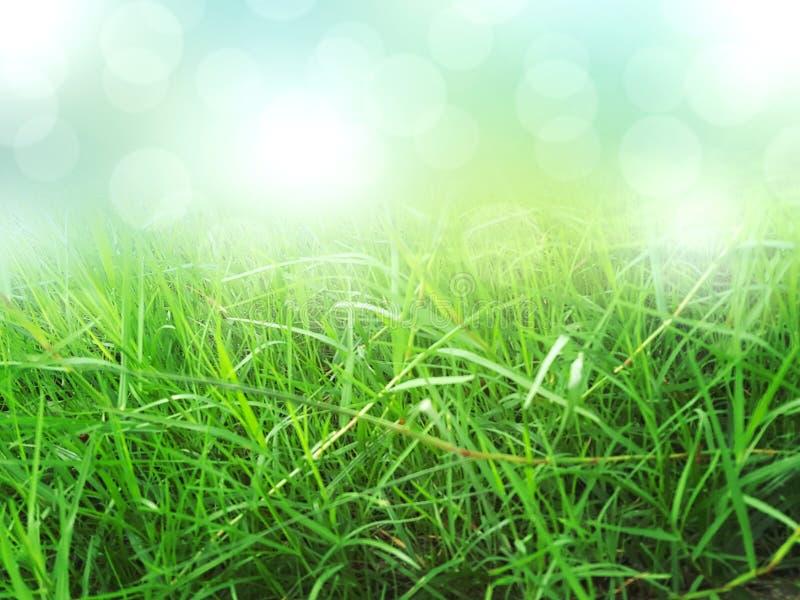绿草背景,自然纹理 免版税库存照片