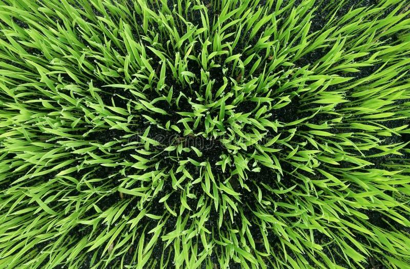 绿草背景 绿草纹理,抽象 库存图片