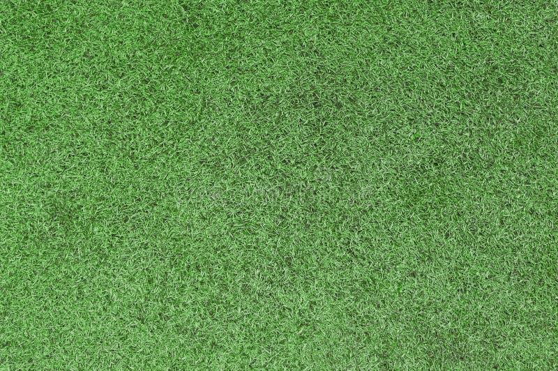 绿草背景 图库摄影