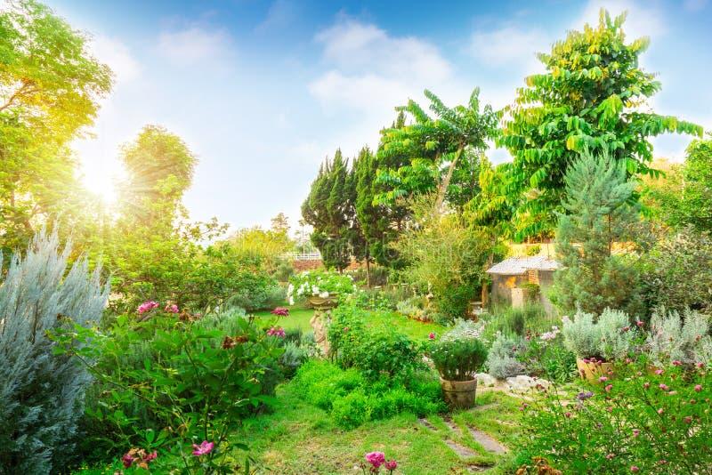 绿草草坪后院的英国村庄庭院,infomal风景用玫瑰,花植物,迷迭香草本,淡紫色装饰 库存照片