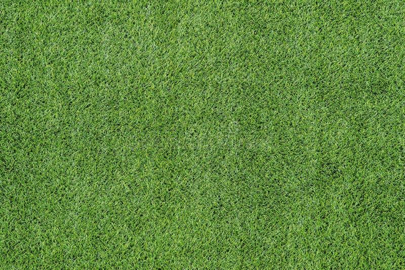 绿草顶视图绿色草坪纹理  免版税库存图片