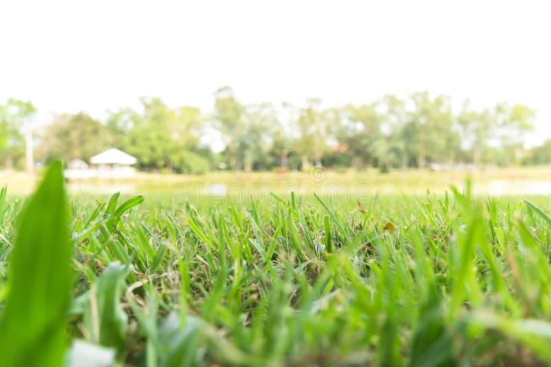绿草领域低角度视图  免版税库存照片
