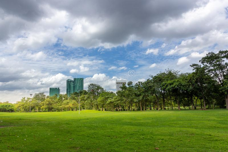 绿草领域在有城市大厦的公园 库存图片