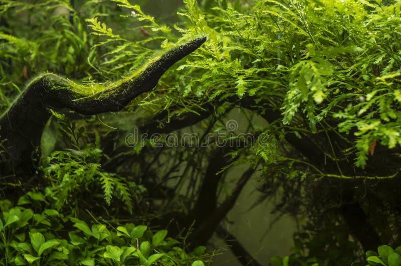 绿藻类背景的明亮的植物  图库摄影