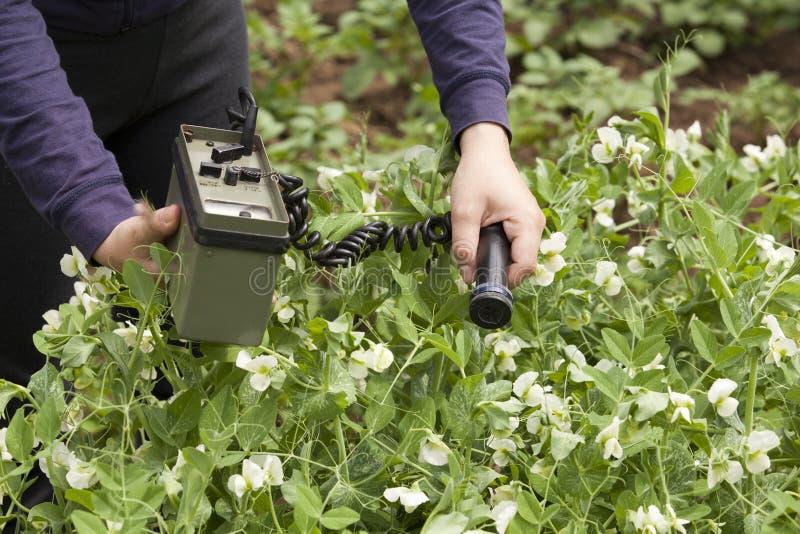 绿豆的评定的辐射能级 图库摄影
