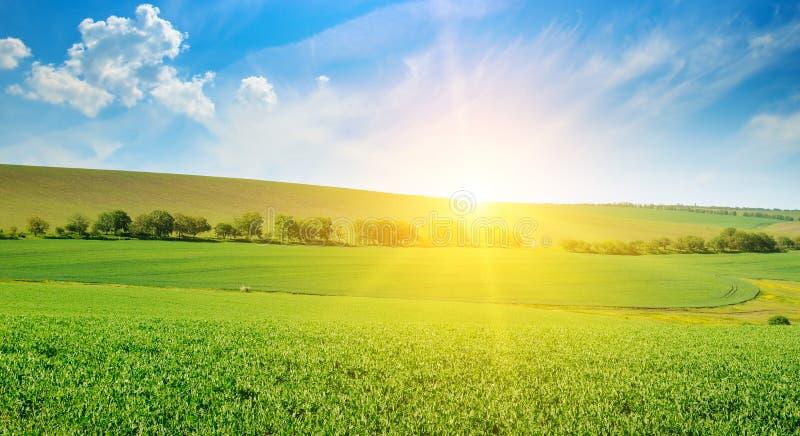 绿豆领域和日出在蓝天 宽照片 库存图片