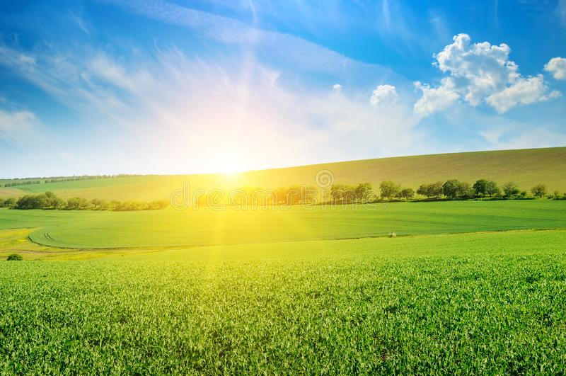 绿豆领域和日出在蓝天 库存照片