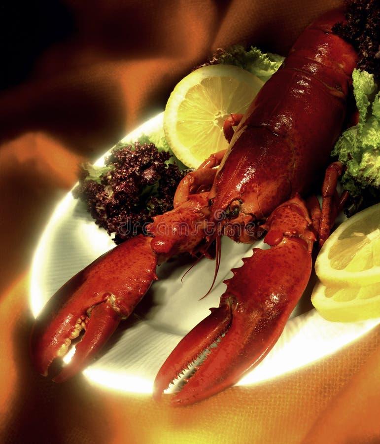 缅因龙虾-美国龙虾 库存图片