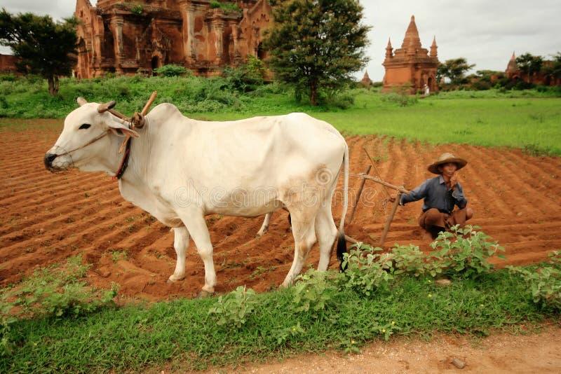 缅甸农夫 库存图片