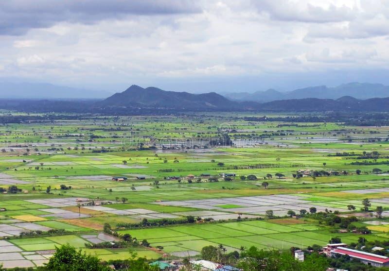 缅甸米领域 免版税图库摄影