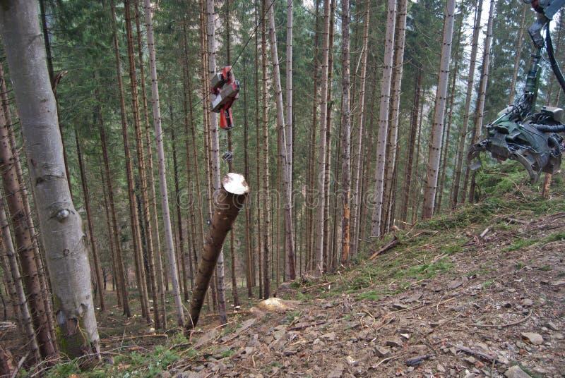 缆绳集材一本云杉的日志 免版税库存照片