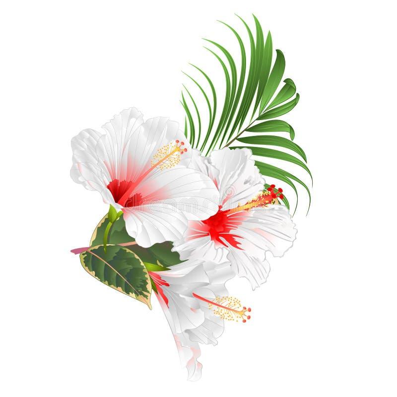 编辑可能一个白色背景集合葡萄酒传染媒介的例证的木槿多色的花热带植物 向量例证