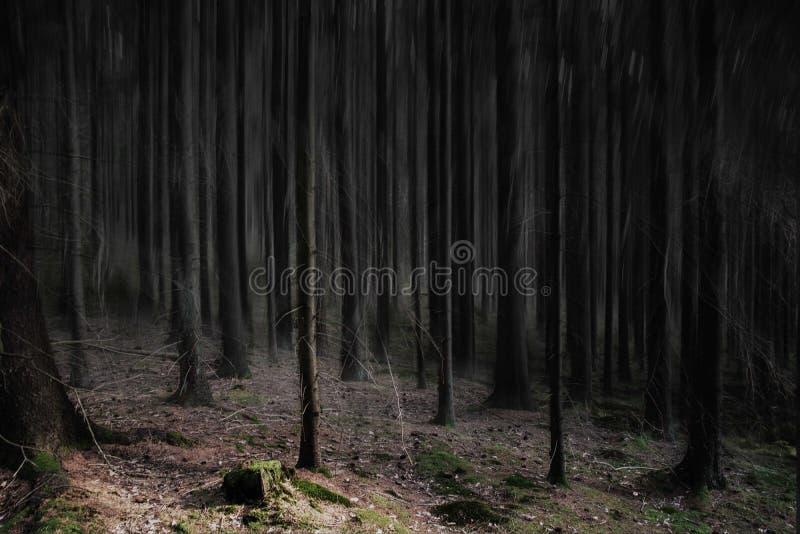 编辑的杉木森林 免版税库存图片