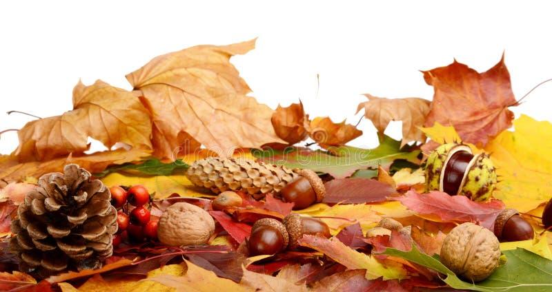 编组在秋叶的许多森林果子在线 免版税库存图片