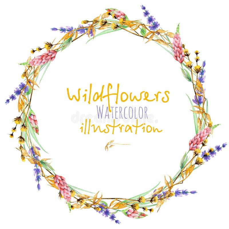 缠绕,圈子与黄色干燥野花、羽扇豆和淡紫色花的框架边界 库存例证